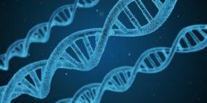 二重になるには遺伝要素もある