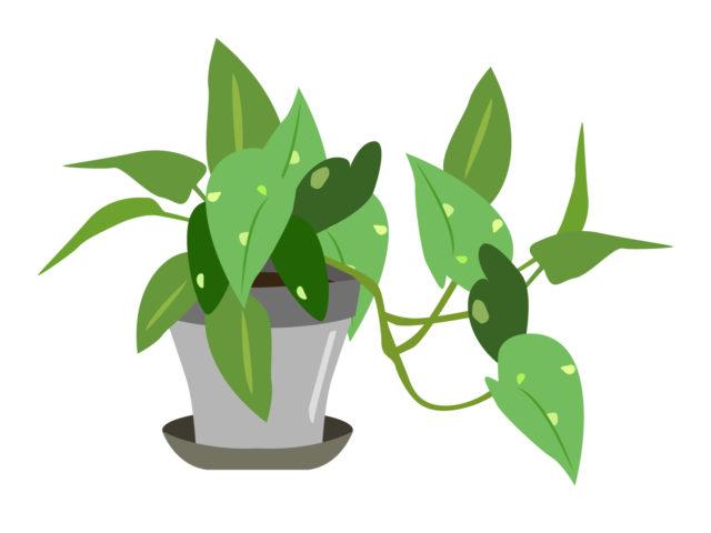 観葉植物の土を赤ちゃんが食べたらどうする!?