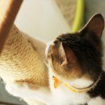 猫の爪とぎ用品、何で代用できる?おすすめは何?